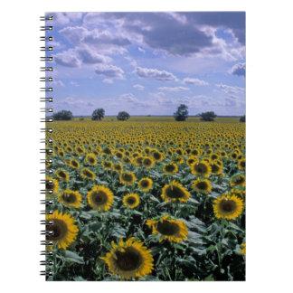 NA, USA, Kansas, Sunflower crop Spiral Notebook