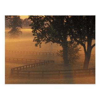 NA, USA, Kentucky. Foggy sunrise on Kentucky Postcard