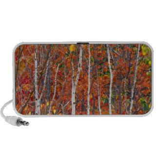 NA, USA, Maine.  Autumn aspens in Acadia iPod Speakers