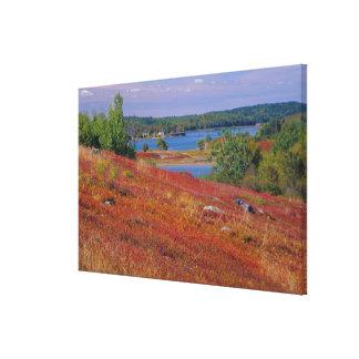 NA, USA, Maine. Blueberry Barrens. Canvas Print