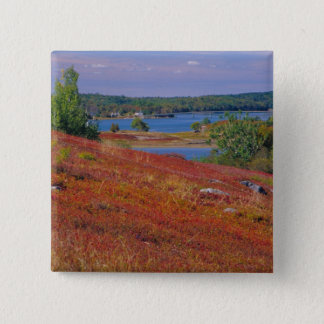 NA, USA, Maine. Blueberry Barrens. Pinback Button