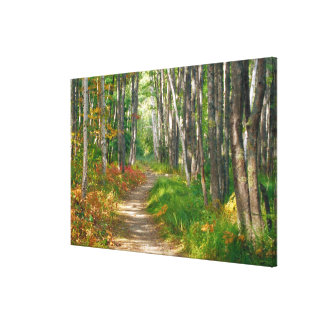 NA, USA, Maine.  Jessup trail in Acadia National Canvas Print