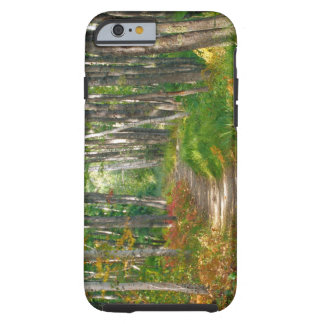 NA, USA, Maine.  Jessup trail in Acadia National Tough iPhone 6 Case