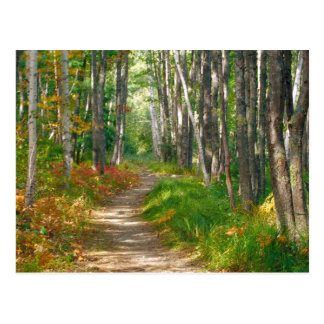 NA, USA, Maine.  Jessup trail in Acadia National Postcards
