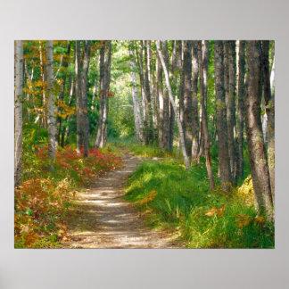 NA, USA, Maine.  Jessup trail in Acadia National Print