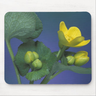 NA, USA, Michigan, Rochester Hills. Marsh Mouse Pad