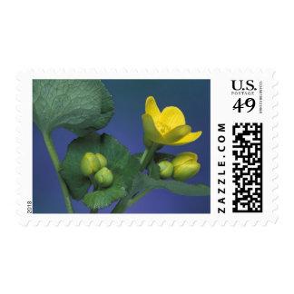 NA, USA, Michigan, Rochester Hills. Marsh Postage Stamp