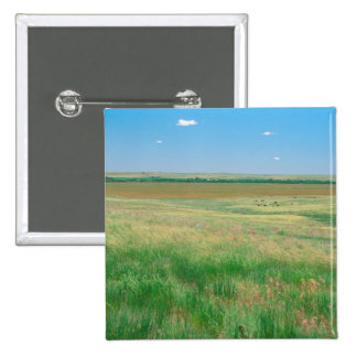 NA, USA, NE. Grasslands near Ogallala with Button