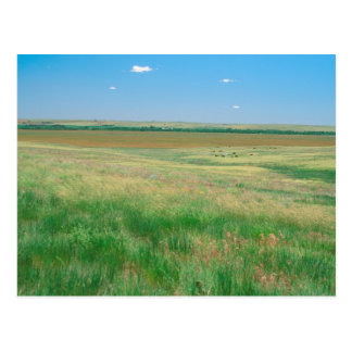 NA, USA, NE. Grasslands near Ogallala with Postcard