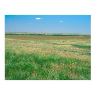 NA, USA, NE. Grasslands near Ogallala with Postcard