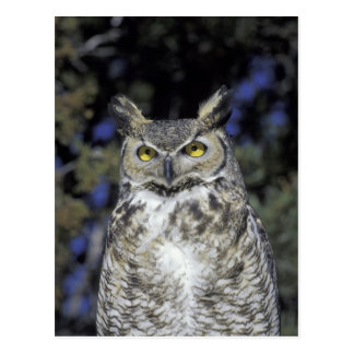NA, USA, New Mexico, Wildlife West Nature Park Postcard