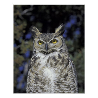 NA, USA, New Mexico, Wildlife West Nature Park Poster
