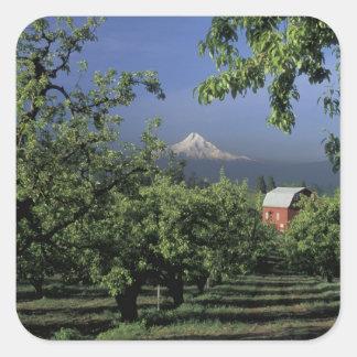 NA, USA, Oregon, near Hood River Mt. Hood with Square Sticker