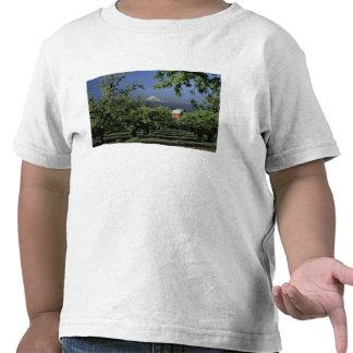 NA, USA, Oregon, near Hood River Mt. Hood with Tshirt