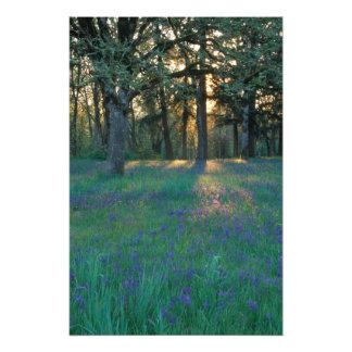 NA, USA, Oregon, Salem. Field of camas and 3 Photo Print