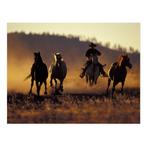 NA, USA, Oregon, Seneca, Ponderosa Ranch, Cowboy 2 Post Cards