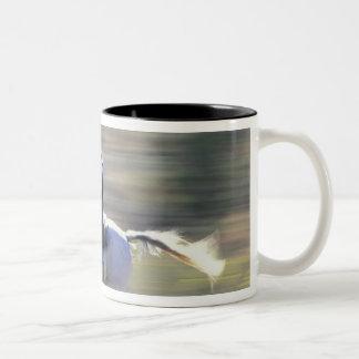 NA USA Oregon Seneca Ponderosa Ranch Cowboy Coffee Mugs