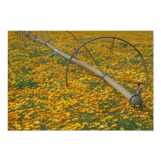 NA, USA, Oregon. Watering system in field of Photo Print