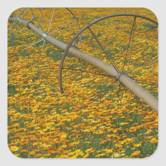 NA, USA, Oregon. Watering system in field of Square Sticker
