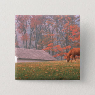 NA, USA, PA, Valley Forge. Horse grazing in a Button