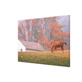 NA, USA, PA, Valley Forge. Horse grazing in a Canvas Print