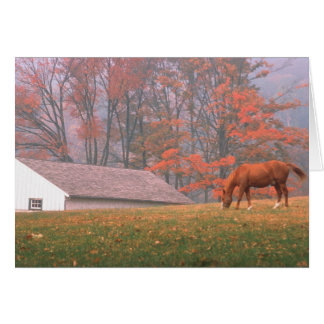 NA USA PA Valley Forge Horse grazing in a Card