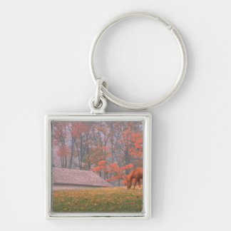 NA, USA, PA, Valley Forge. Horse grazing in a Keychain