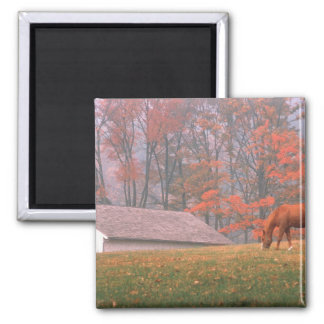 NA, USA, PA, Valley Forge. Horse grazing in a Magnet