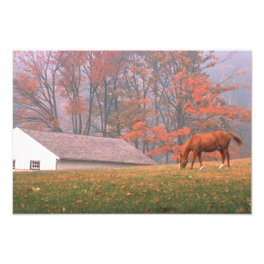 NA, USA, PA, Valley Forge. Horse grazing in a Photo Print
