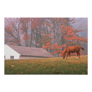 NA, USA, PA, Valley Forge. Horse grazing in a Posters
