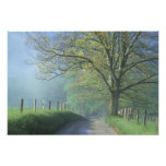 NA, USA, Tennessee, Cades Cove, Great Smoky Photograph