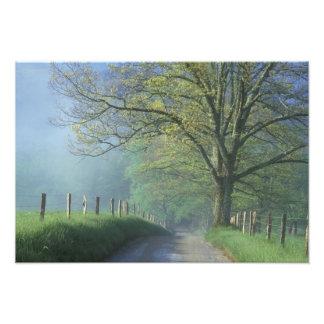NA, USA, Tennessee, Cades Cove, Great Smoky Photo Print