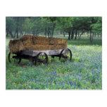 north america, wagon wheel, spring, darrell gulin,