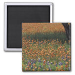 NA, USA, Texas, Hill Country, Paint brush and 2 Inch Square Magnet