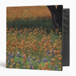 NA, USA, Texas, Hill Country, Paint brush and Binder