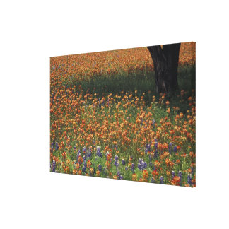 NA, USA, Texas, Hill Country, Paint brush and Canvas Print