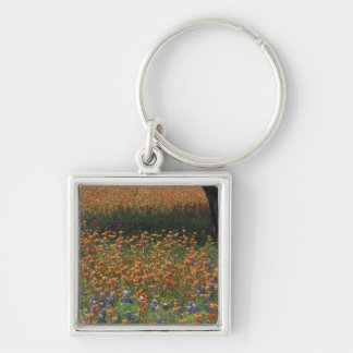 NA, USA, Texas, Hill Country, Paint brush and Key Chains