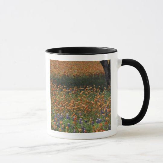 NA, USA, Texas, Hill Country, Paint brush and Mug
