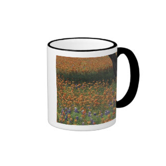 NA, USA, Texas, Hill Country, Paint brush and Coffee Mugs