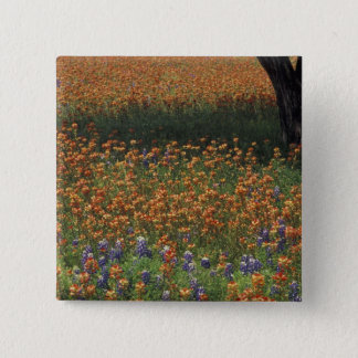 NA, USA, Texas, Hill Country, Paint brush and Pinback Button