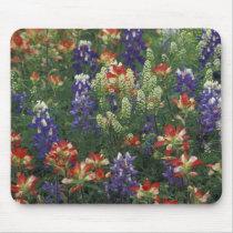 NA, USA, Texas, near Marble Falls, Paint brush Mouse Pad