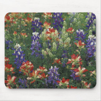 NA, USA, Texas, near Marble Falls, Paint brush Mouse Pad