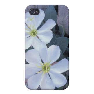 NA, USA, Utah, Arches NP, Evening primrose Case For iPhone 4