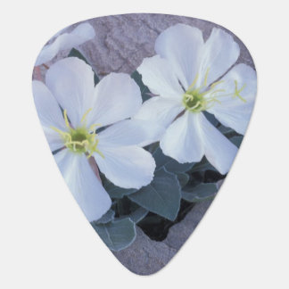 NA, USA, Utah, Arches NP, Evening primrose Guitar Pick