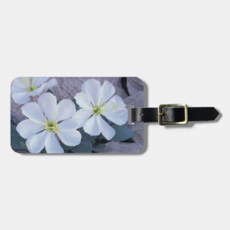 NA, USA, Utah, Arches NP, Evening primrose Tag For Bags