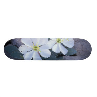 NA, USA, Utah, Arches NP, Evening primrose Skateboard Deck