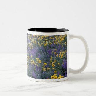 NA, USA, Washington Dalles, Lupine and Two-Tone Coffee Mug