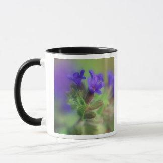 NA, USA, Washington, Eastern Washington. Wild Mug