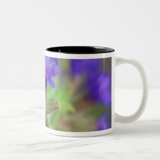 NA, USA, Washington, Eastern Washington. Wild Two-Tone Coffee Mug