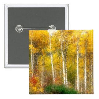 NA, USA, Washington, Fall Aspen Trees along Buttons